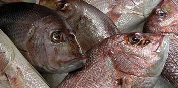 головы рыб