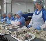 сортировка рыбы