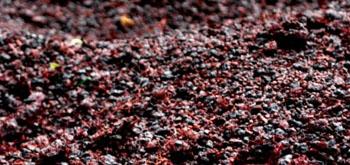 виноградная выжимка
